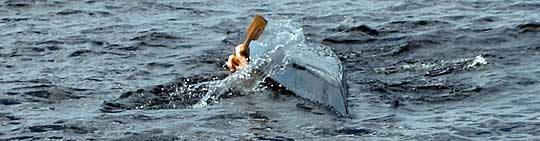 David med Black Pearl