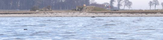 Seal in Salviken